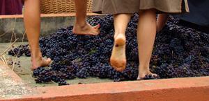 decouverte-vin-antique